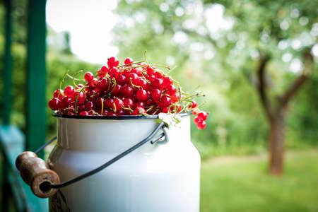 enamel: Red currants in metal, enamel milk jug against green orchard