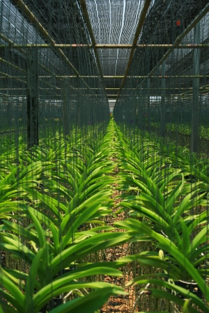 Nursery of orchid farm in Thailand photo