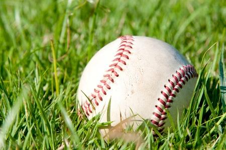 Pick your Baseball Stock Photo - 10385122
