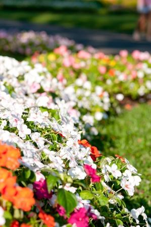 Background Flower Garden in Rama 9 Garden Thailand L photo