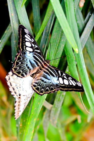 amanda: Natural Butterfly in Malaysia Stock Photo