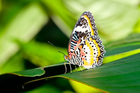 Natural Butterfly in Malaysia photo