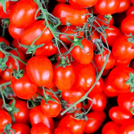 newsgroup: Red tomatoes Stock Photo