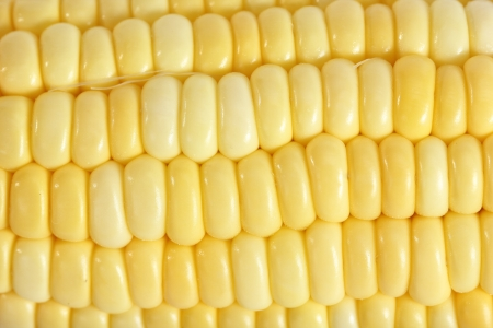 Close up corn on  the white background photo