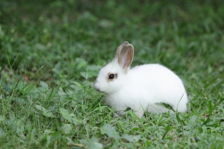 bugs bunny: Lovely rabbits in Thailand Yard
