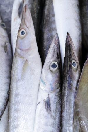 close up bluefine tuna fish in the fresh market photo
