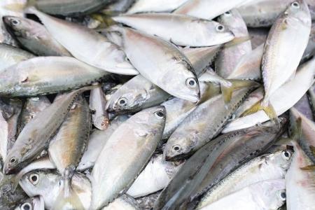 close up bluefine tuna fish in the fresh market Stock Photo