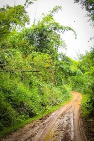 Close up country road in Rubber plantation photo