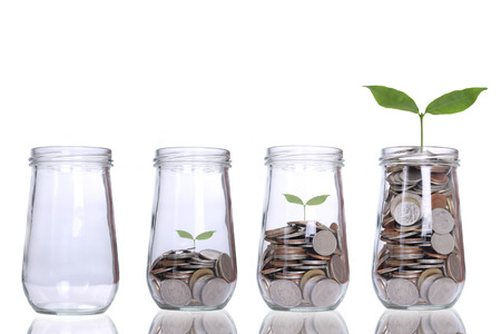 동전 돈을 식물 성장 단계