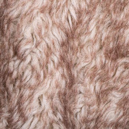 ovine: Close up Animal wheel in the studio Stock Photo