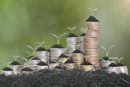 Growing plant step with coin money Stockfoto