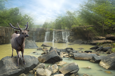 deer stand: Deer stand on the rock in water wall