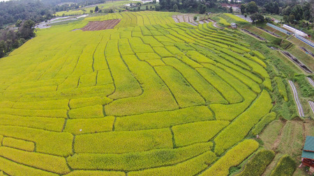 high dynamic range: Rice fields landscape terraced agriculture of Chiang mai Thailand with TOp view