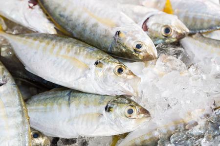 thunnus: Fresh fish in market Malaysia
