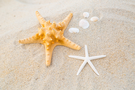 star fish: Summer 2015 with Star fish for your holiday activity