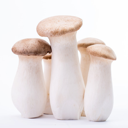 Eryngii mushroom five pieces isolated with white background