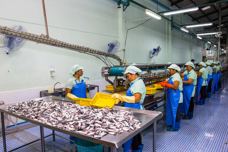 HATYAI ,SONGKLA-Auguest 31,2015: Worker are cleanning raw material Sardines fishes for send to production line in Canned fish factory in Songkla,Thailand. Редакционное