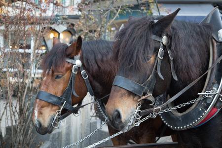 neuschwanstein: Horse service for go to Neuschwanstein Castle in Germany. Service for tourist people.