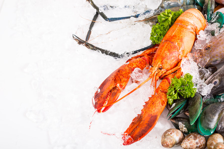 Seafood market fresh food sea with white background. Stock Photo