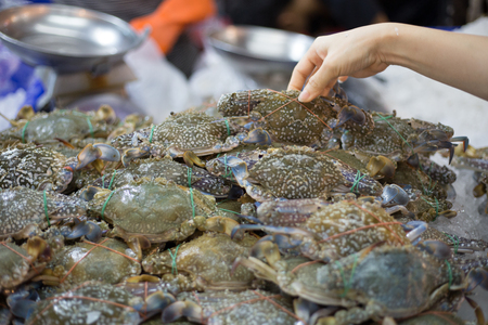 Fresh blue crab customer choose raw material in fresh market. Stock Photo