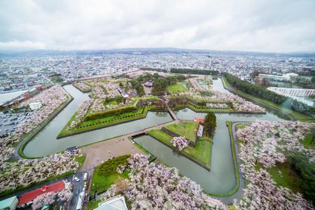 Cherry blossom hakodate garden near Goryokaku tower in Hokkaido ,Japan.