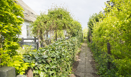 Foot path small street for entry to house in Giethoorn ,Netherlands,