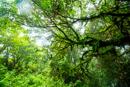 Deep forest jungle ,moss and rainforest in Thailand.