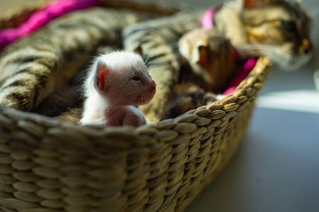 Baby cat sleep in basket at home