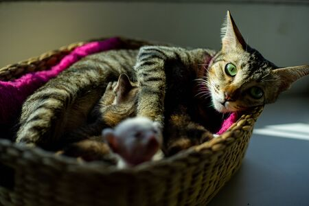 Mother cat sleep with its baby in basket at home Standard-Bild