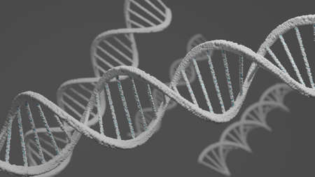 3D rendering DNA structure of human for clone life bio technology gene. Close up molecular of human life of biochemistry concept.