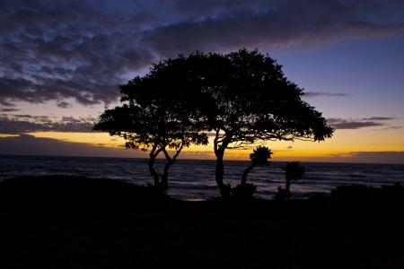 Big Tree Little Tree Silhouette in the Hawaiian sunrise Stock Photo