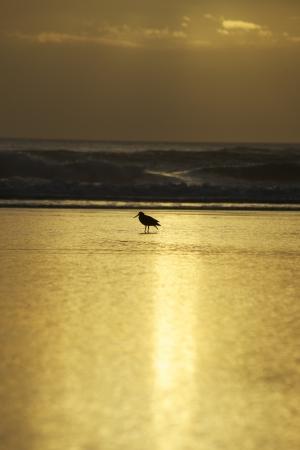 Bird at Bethells Beach in New Zealand Stock Photo