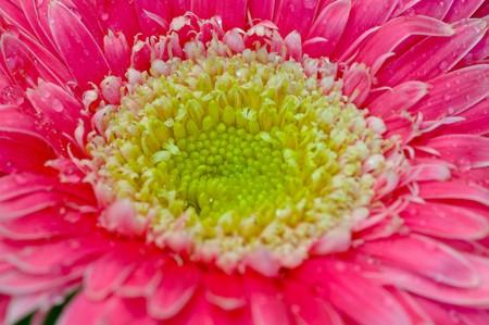 Thai red flower photo