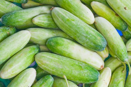 cucumber Stock Photo - 7661368