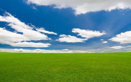 greed field on the blue sky Foto de archivo