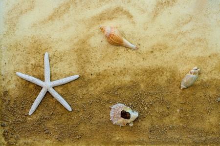 starfish and shellfish photo