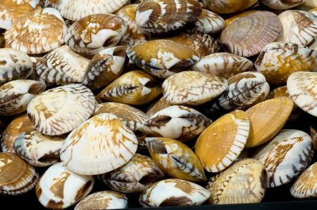 mollusk: shellfish,mollusk Stock Photo
