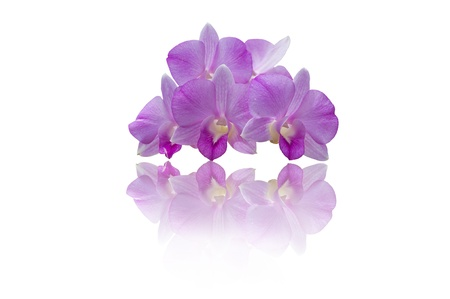 individual: purple orchid isolated on white background Stock Photo