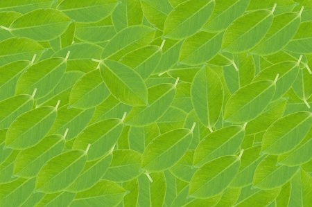 green leaf background photo