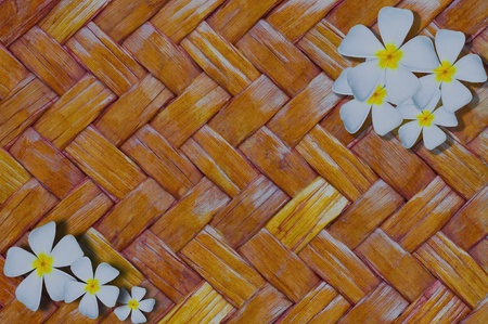 isolated Frangipani or Plumeria orTempletree on rattan background