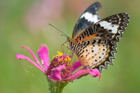 colorful monarch butterfly on  flower photo