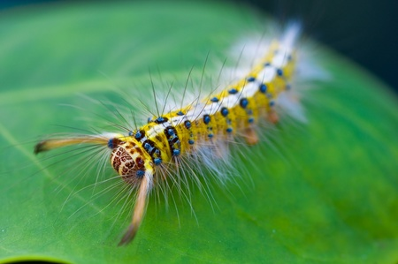 colorful caterpillar on green leaf Stock Photo - 11011122
