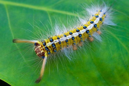 colorful caterpillar on green leaf Stock Photo - 11011125