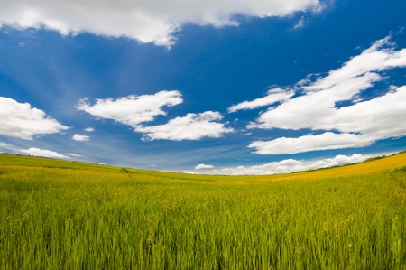 landscape of rice farm  under the blue sky  in Thailand Stock Photo - 11187091