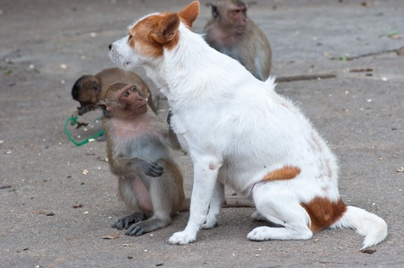 Monkeys checking for fleas and ticks in the dog  photo