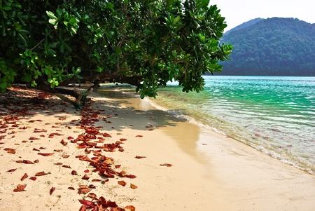 Surin island national park in Thailand photo