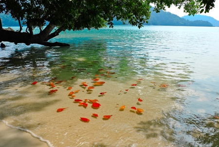 Surin island national park in Thailand Stock Photo - 12631839