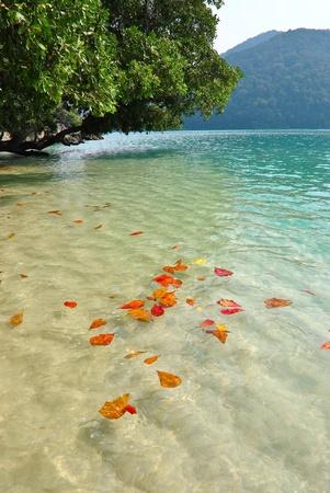 surin: Surin island national park in Thailand