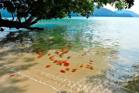 Surin island national park in Thailand Stock Photo - 12638602