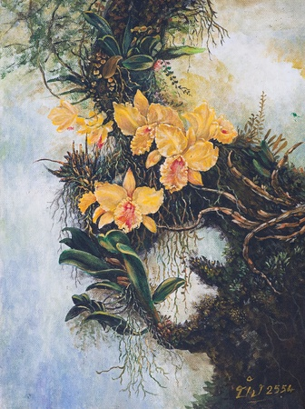 Oil painting on canvas - yellow forest orchids Stock Photo - 12836799